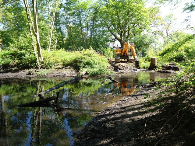 - We were requested to cut back the trees, desilt the pond and make the woodland and water more appealing for wildlife especially wildfowl.